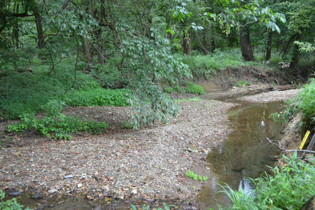 The stream bed