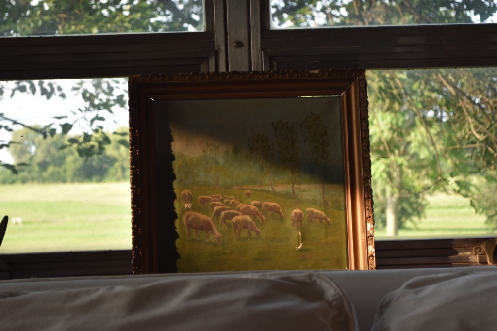 sheep, vintage art
