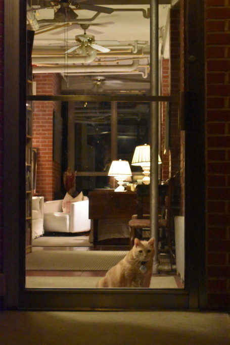 Boo, our puppy-cat, guards the door, awaiting my return.